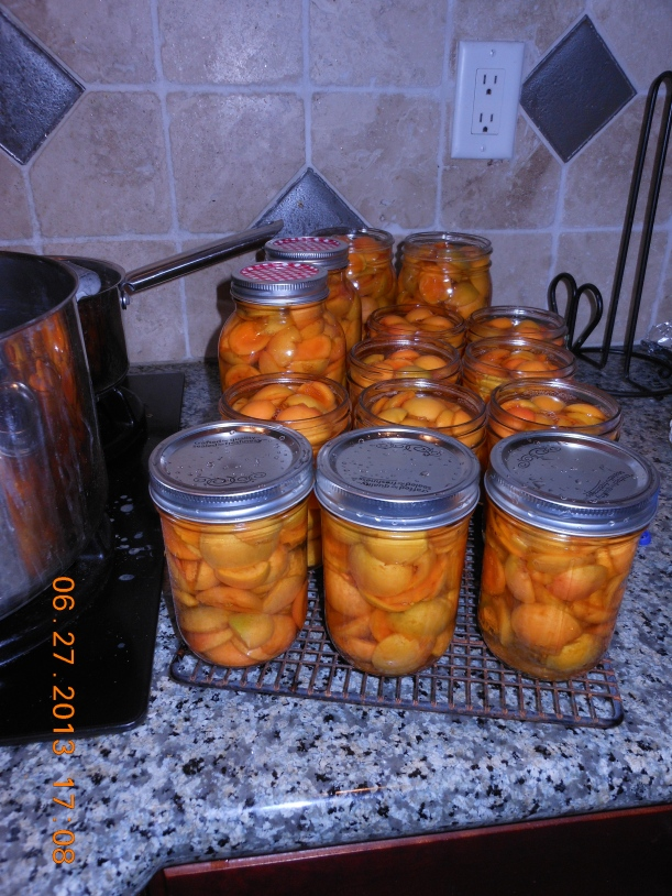 I heated the apricots in a sugar-water solution and put them in the sterlized jars.  Then I processed them in the water bath canner.