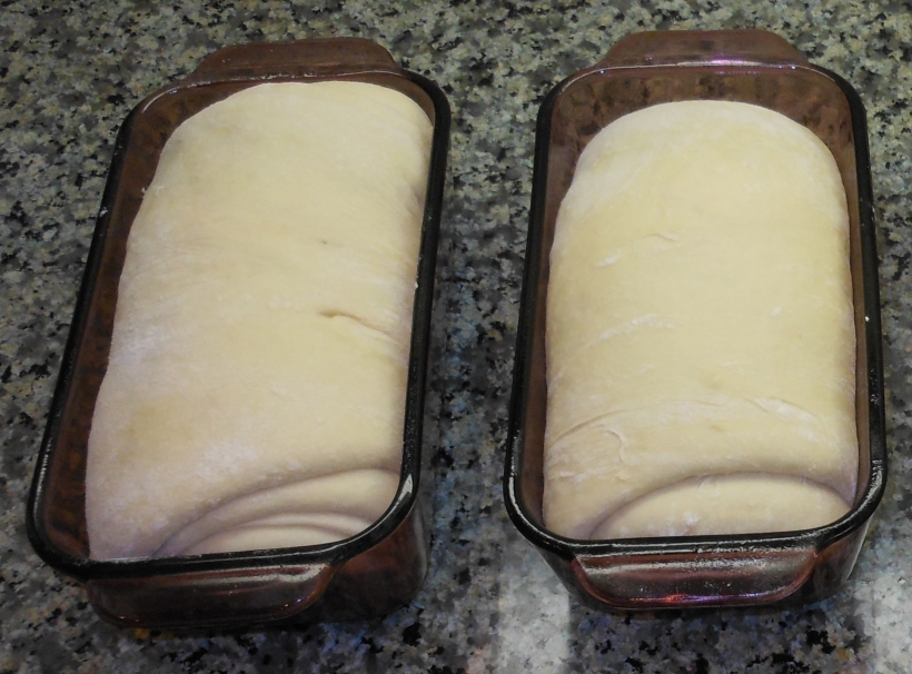 Look at those beautiful, puffy loaves!  And that's after only 20 minutes!