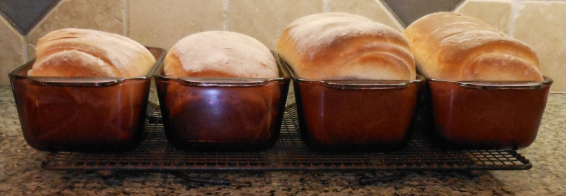 The two loaves on the left is my first batch.  It improved a little, but it didn't rise anywhere near as much as my second batch (on the right).