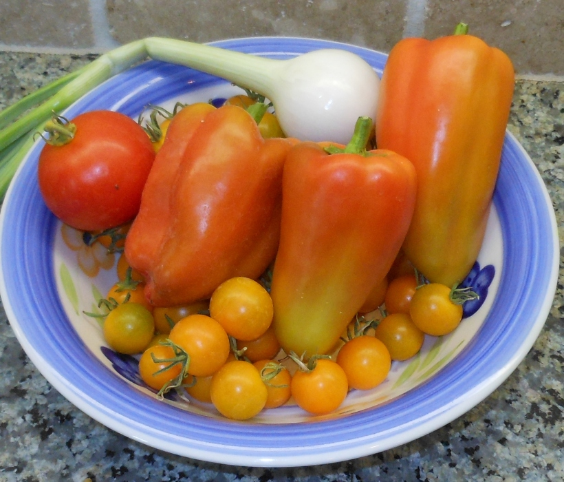 "I picked 3 sweet peppers, 1 ""regular"" tomato, many yellow cherry tomatoes, and one onion.  Several other onions could be picked, but I'm going to wait a day or so before I harvest them."
